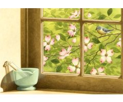 Spring Dogwood Window Print